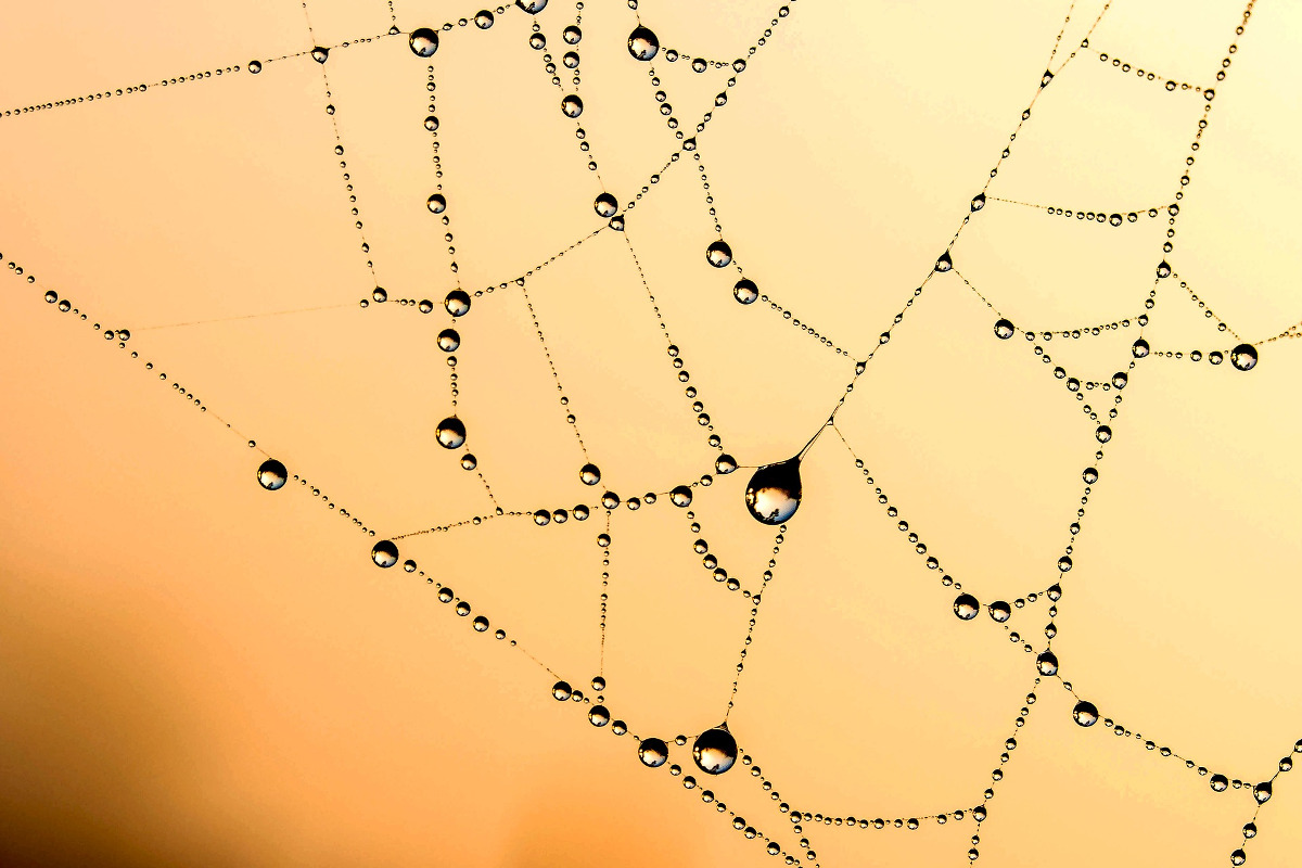 Spider Web representing various Internet and Intranet network of users.